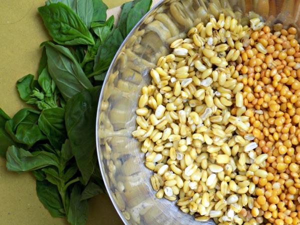 ensalada de grano de kamut con vinagreta de albahaca